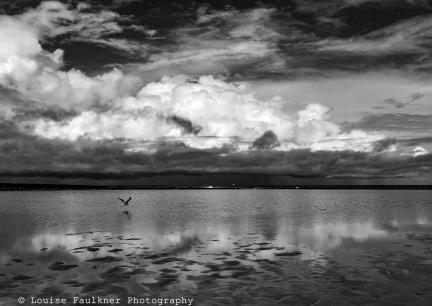 Bird and Storm, Newcastle Ocean Baths - March 2017