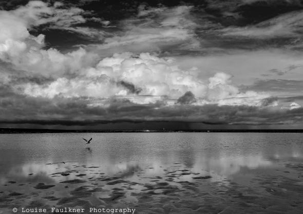 Bird and Storm - Newcastle Ocean Baths - March 2017