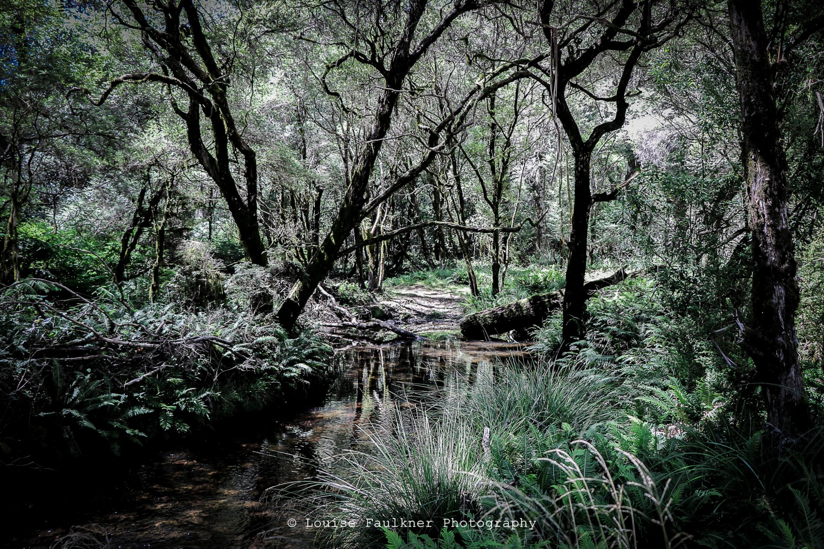 Dilgry bushcamp - Barrington Tops STATE FOREST