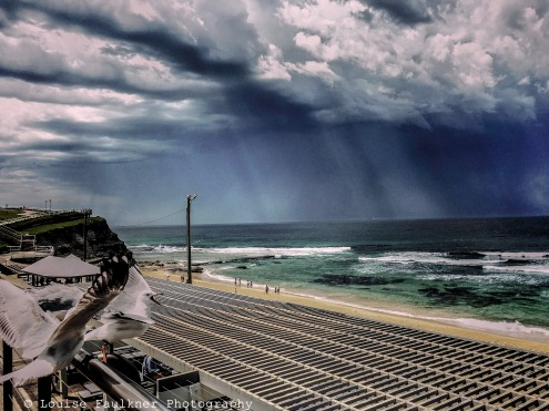 Storm with angry gulls