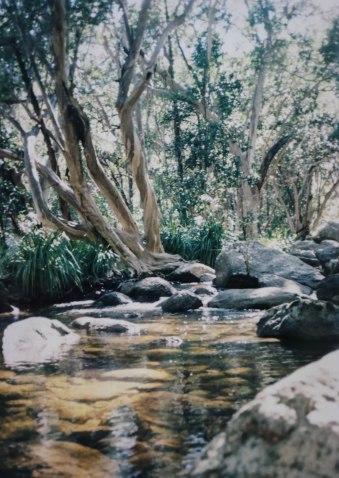 daintree-scenery