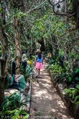 The Fairy Garden, Broadmeadow.