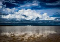 Bird Boat Storm Sea II